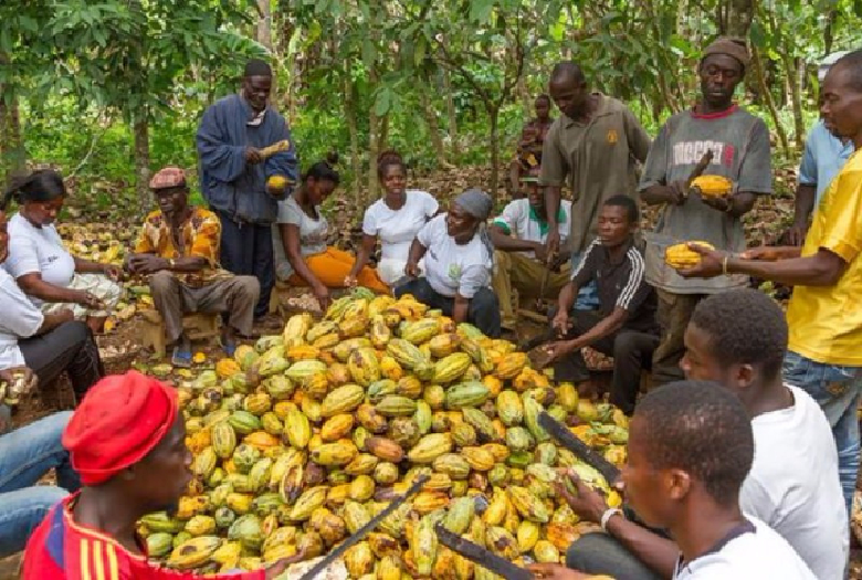 Be sensitive to the plight of Cocoa Farmers – Minority tells COCOBOD